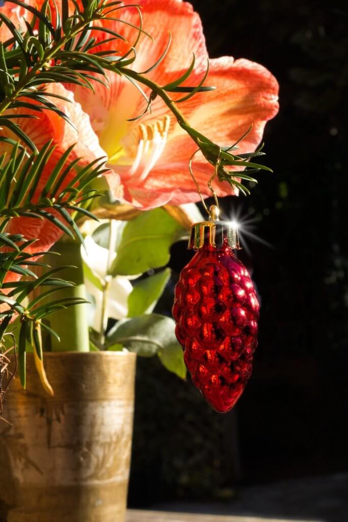 Amaryllis dekoriert