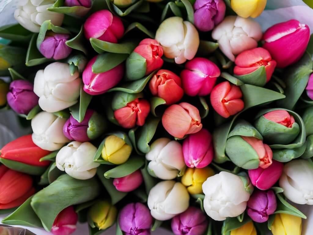 Bund Bunte Tulpen