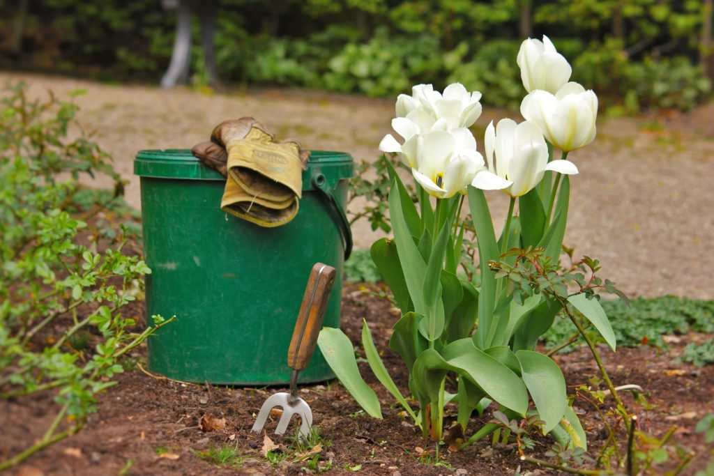 Gaertnern Pflanzen Pflegen