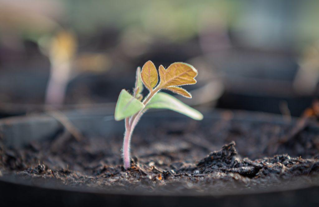 Gute Erde Fuer Pflanzen