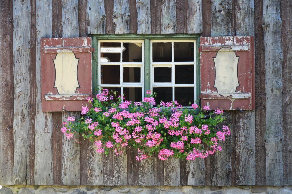 Hängegeranien an der Fensterbank