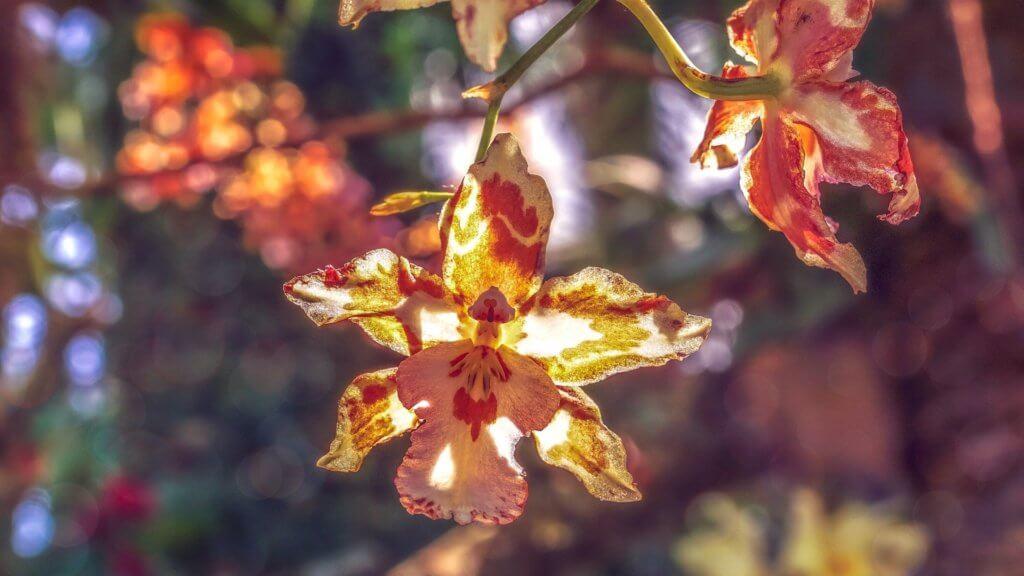 Orchidee Braun Interessante Maserung
