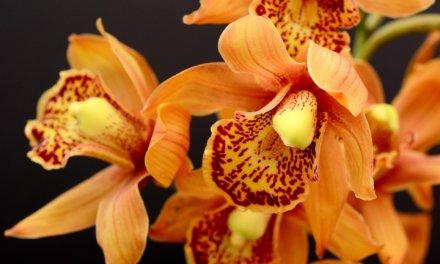 Mindestens 3 Orchideen-Arten, die Sie noch nicht kannten.