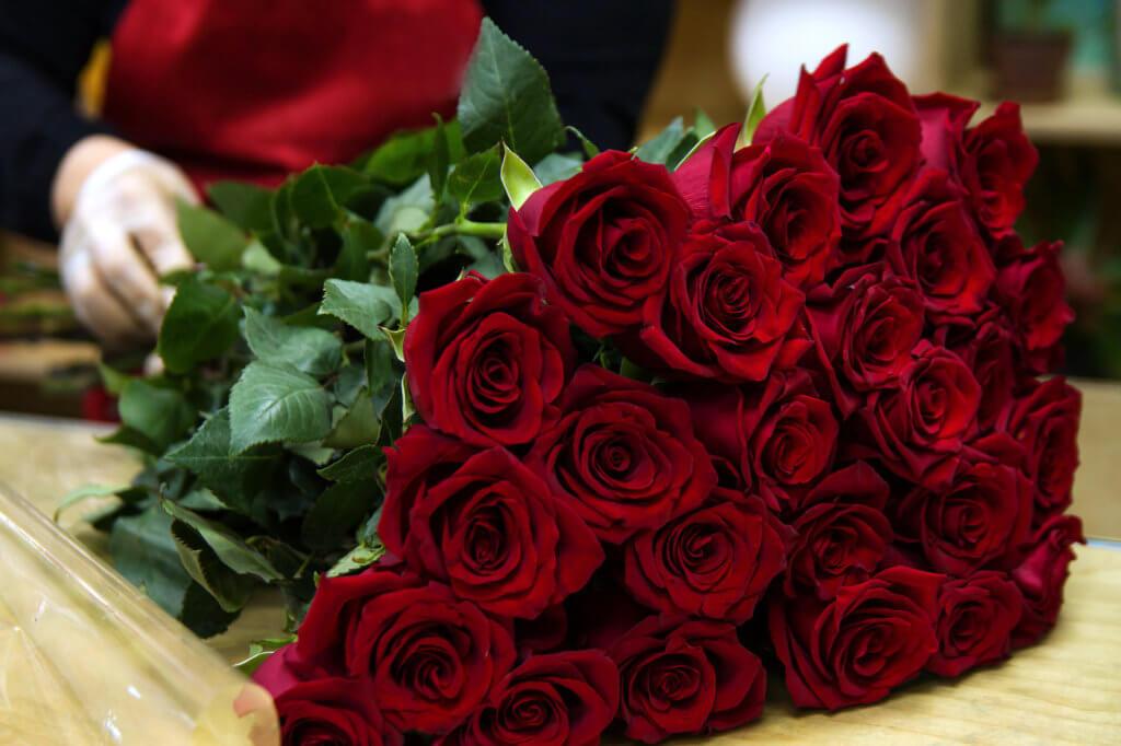 Rote Rosen Immer Viele