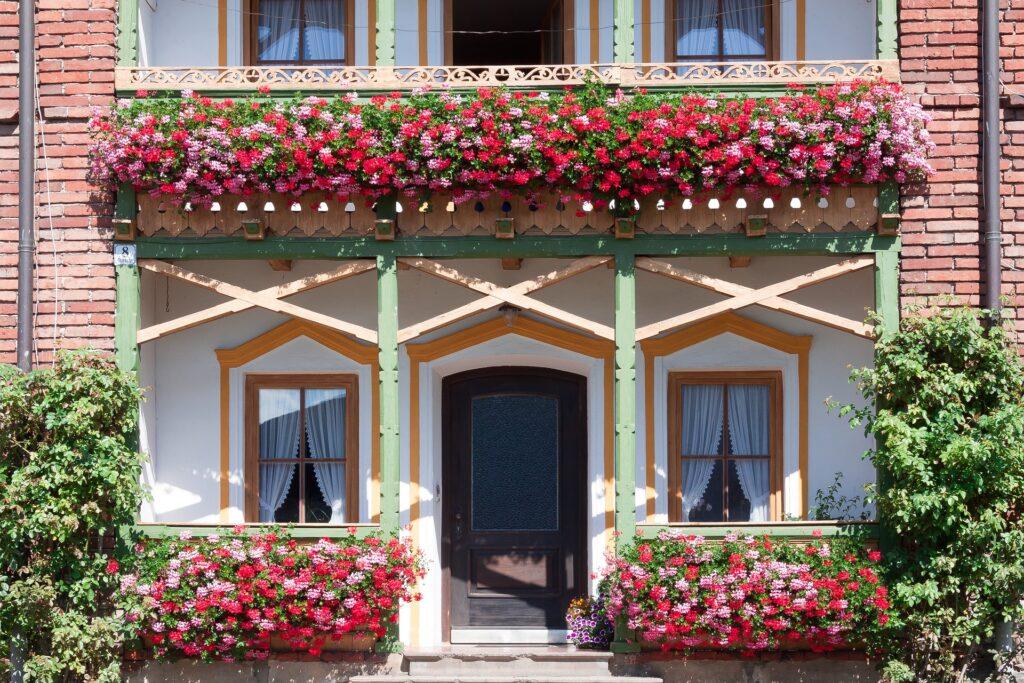 rote und rosane Geranien an Balkon und Eingang