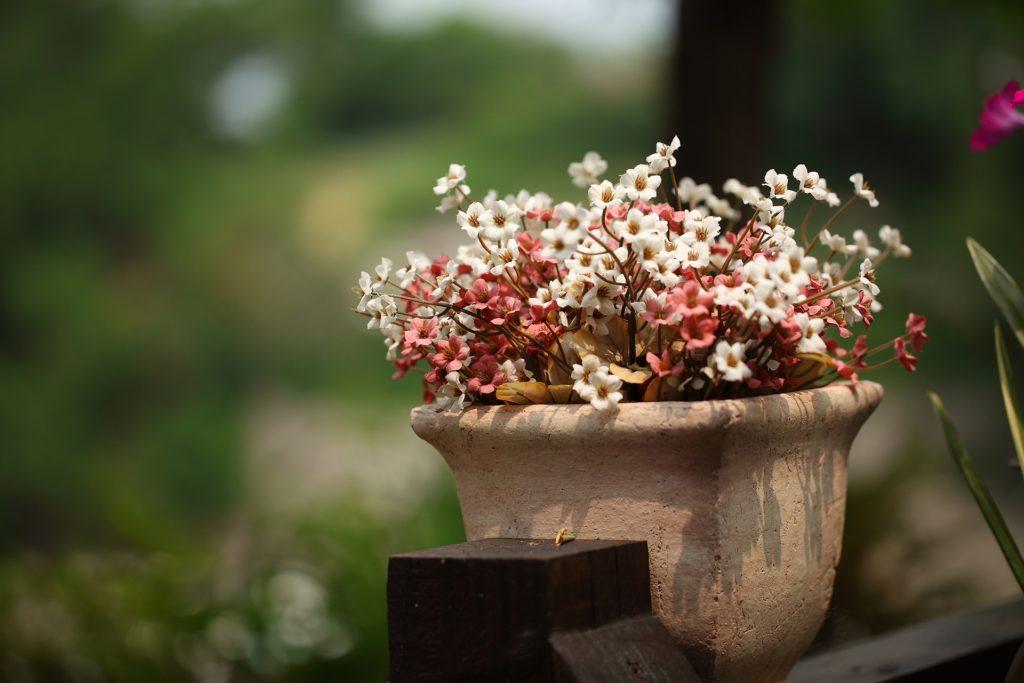 Schoene Topfpflanze Blueht Im Tontopf