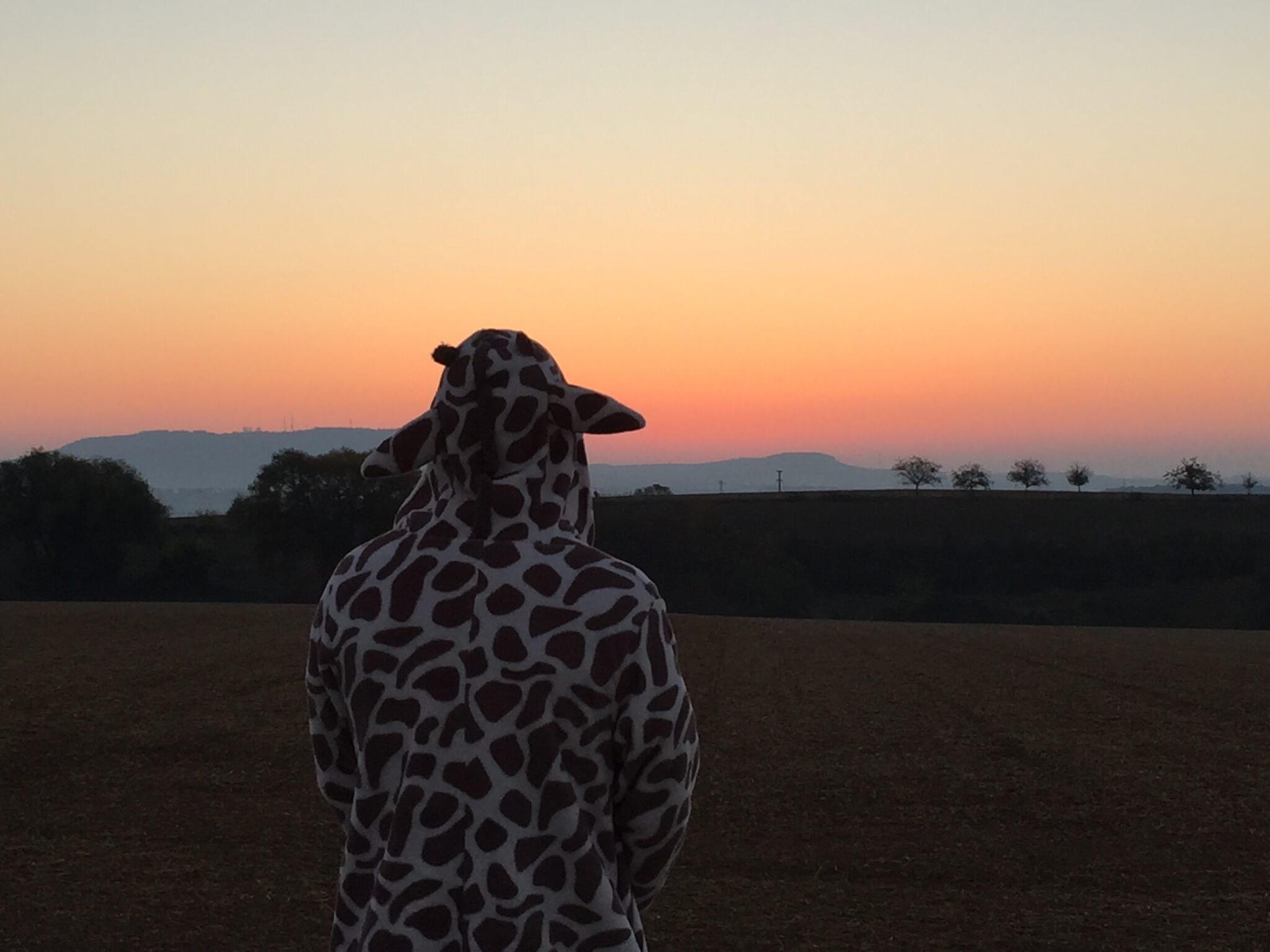 Sonnenaufgang Mit Giraffe