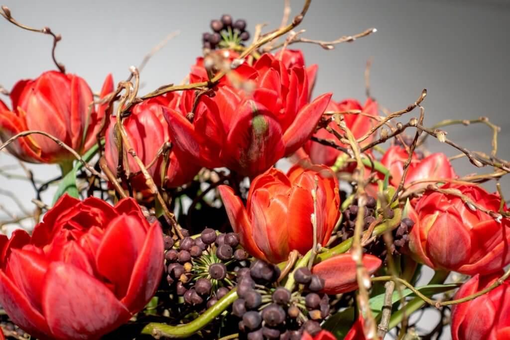 Strauss Rote Tulpen Weidenzweige