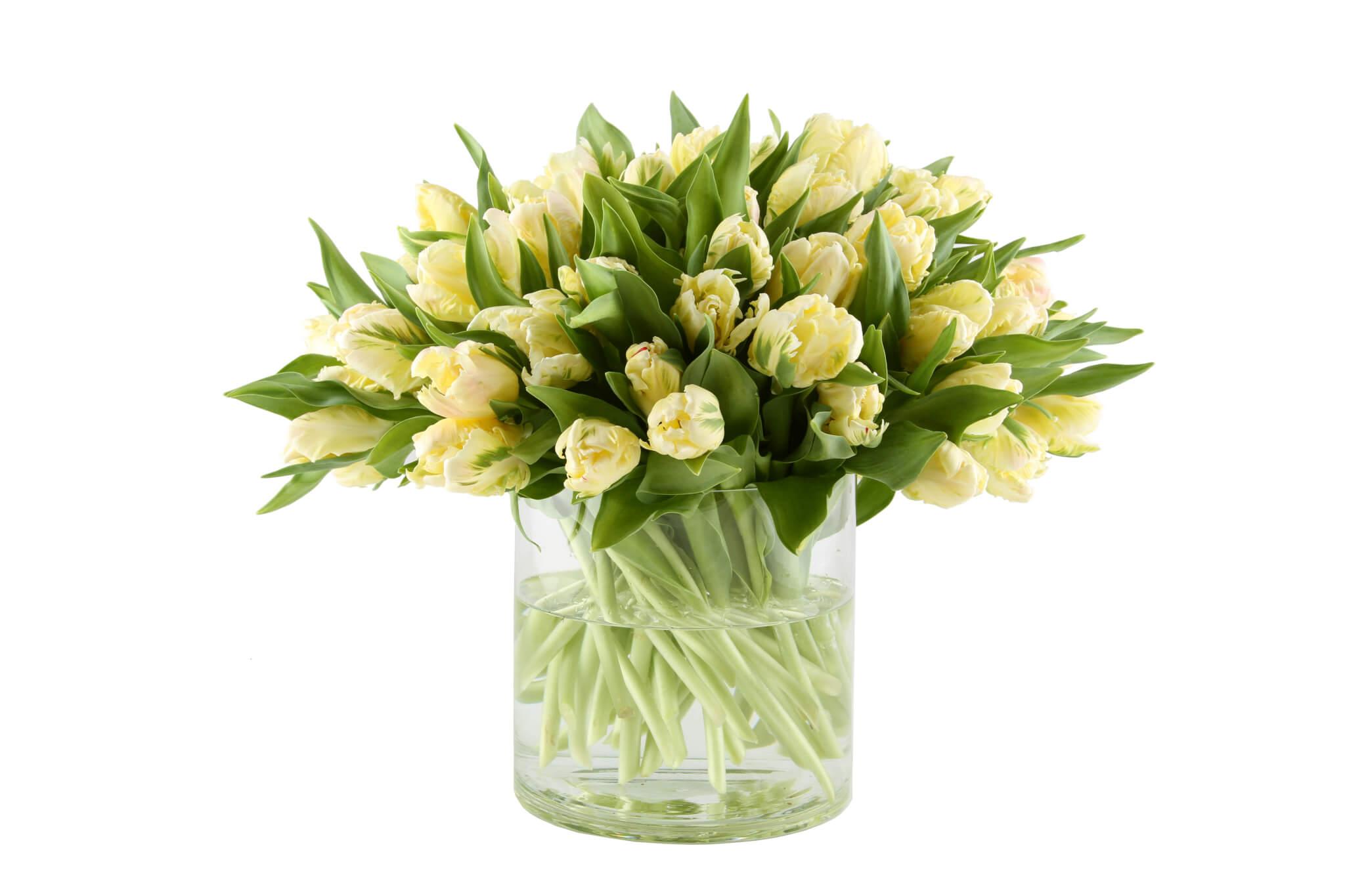 Weiße Tulpen Strauß