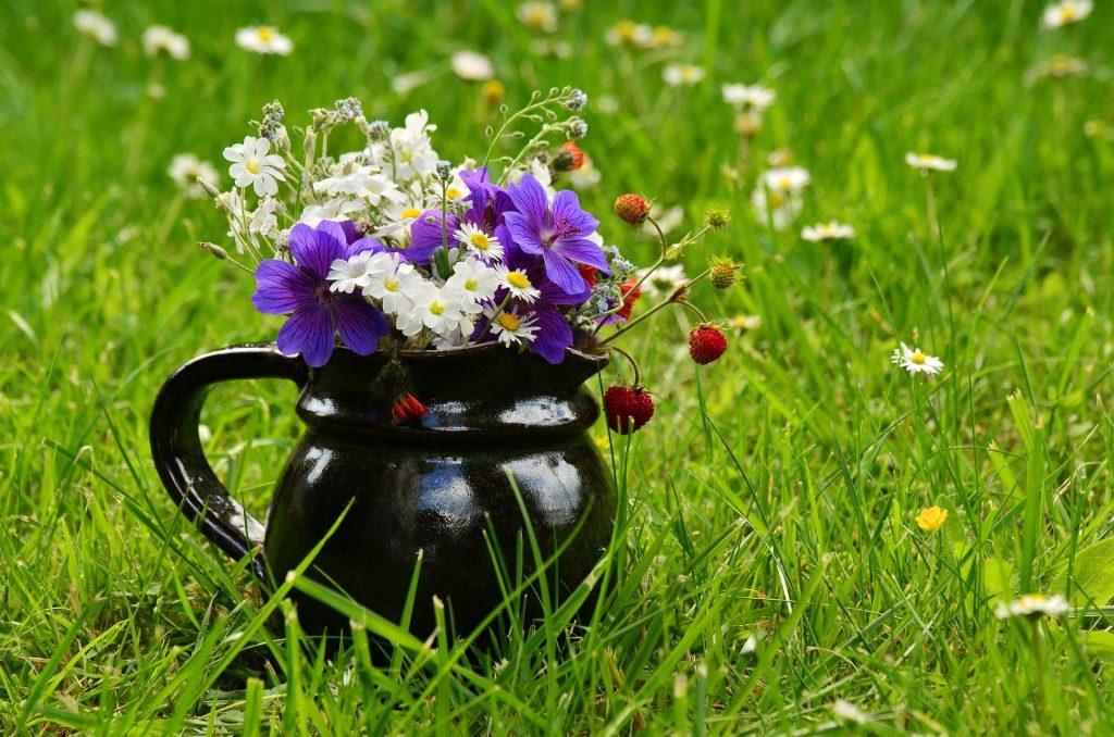 Wiesenblumen auf der Wiese